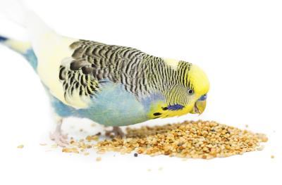 Корми для птахів