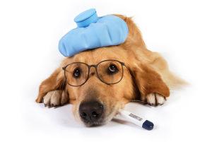 Ветеринарна аптека