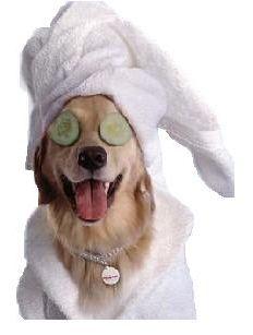 Косметика та шампуні для собак