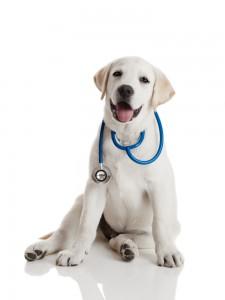 Лікувальний корм для собак