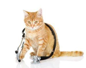 Лікувальний корм для котів